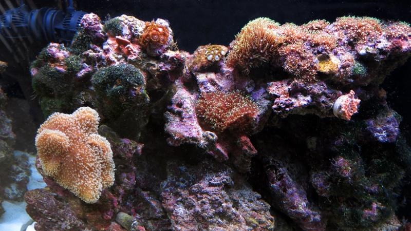 Présentation de mon nano reef 7img_110
