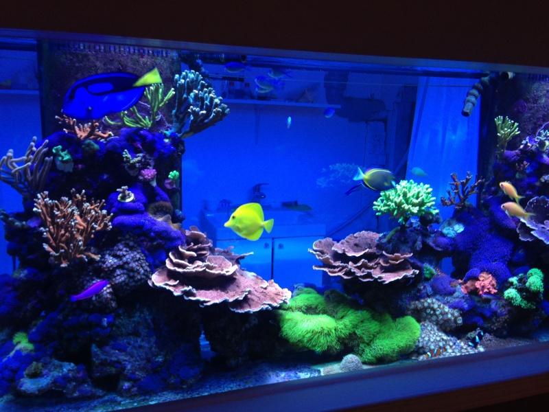 Présentation de mon nano reef - Page 3 Img_2611