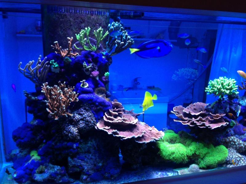Présentation de mon nano reef - Page 3 Img_2612