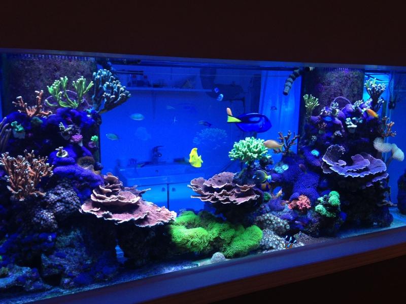 Présentation de mon nano reef - Page 3 Img_2613