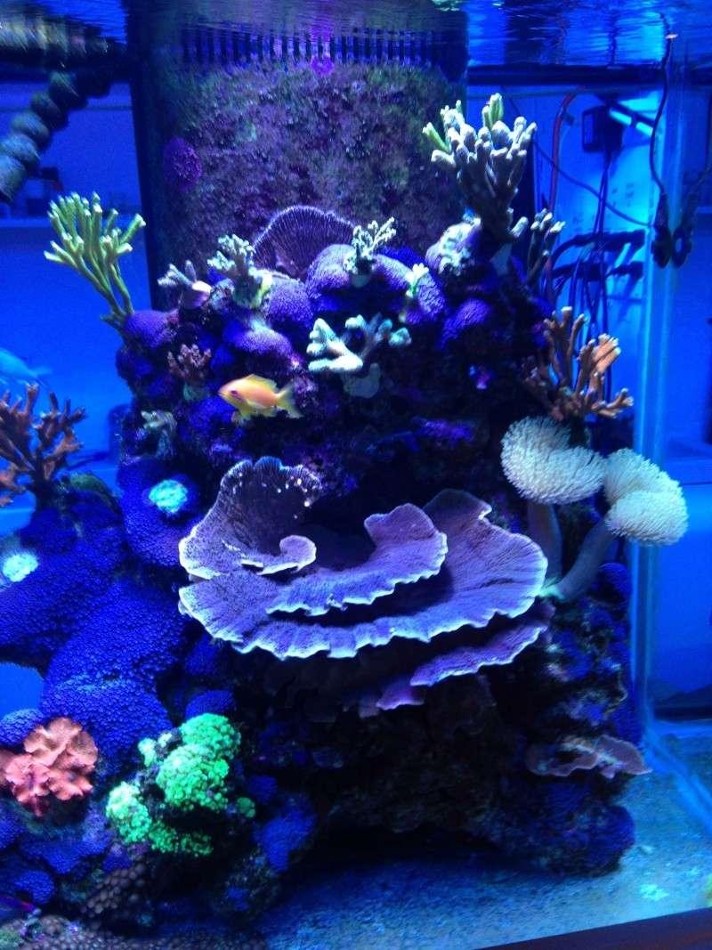 Présentation de mon nano reef - Page 3 Img_2614