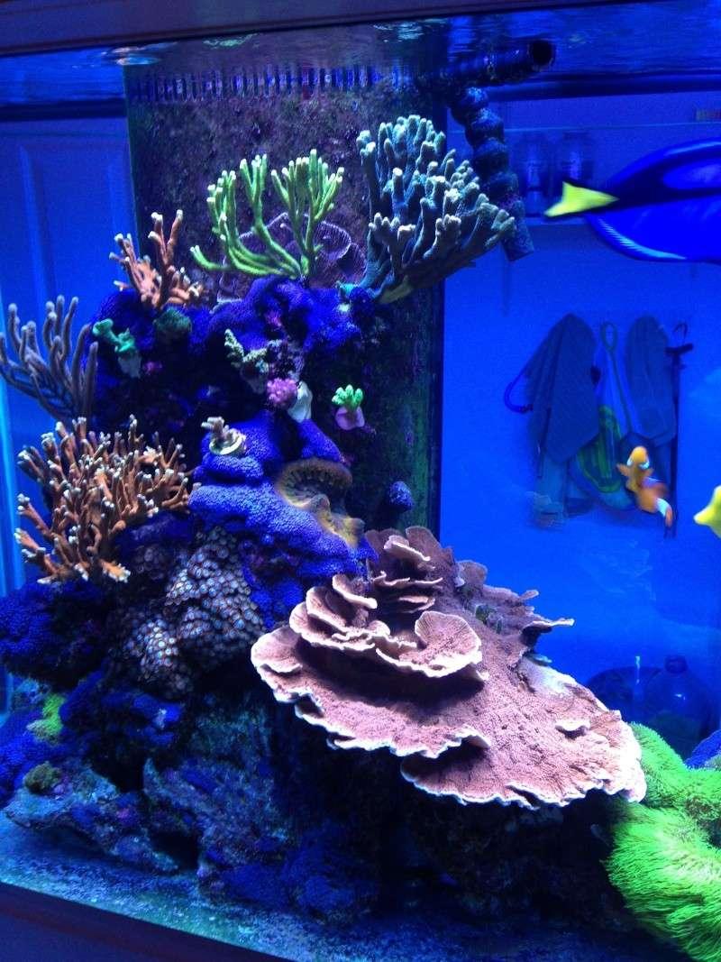 Présentation de mon nano reef - Page 3 Img_2618