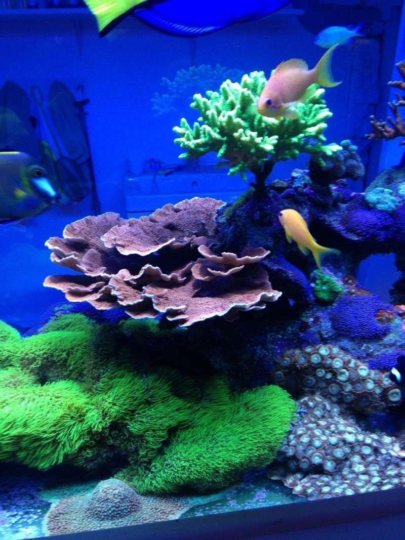 Présentation de mon nano reef - Page 3 Img_2619