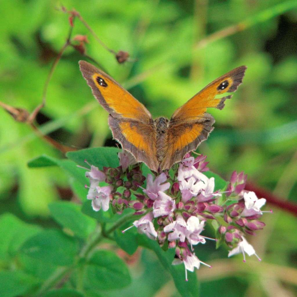 "Essais ""papillons"" avec... Crw_0710"