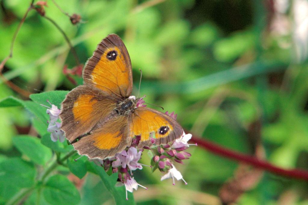 "Essais ""papillons"" avec... Crw_0711"
