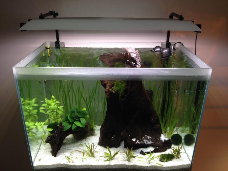 Démarrage aquarium 85L bruts Img_0615