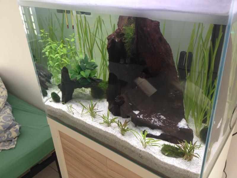 Démarrage aquarium 85L bruts Img_0616