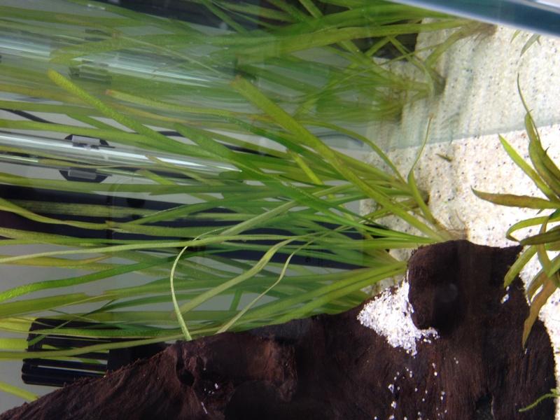 Démarrage aquarium 85L bruts Img_0620