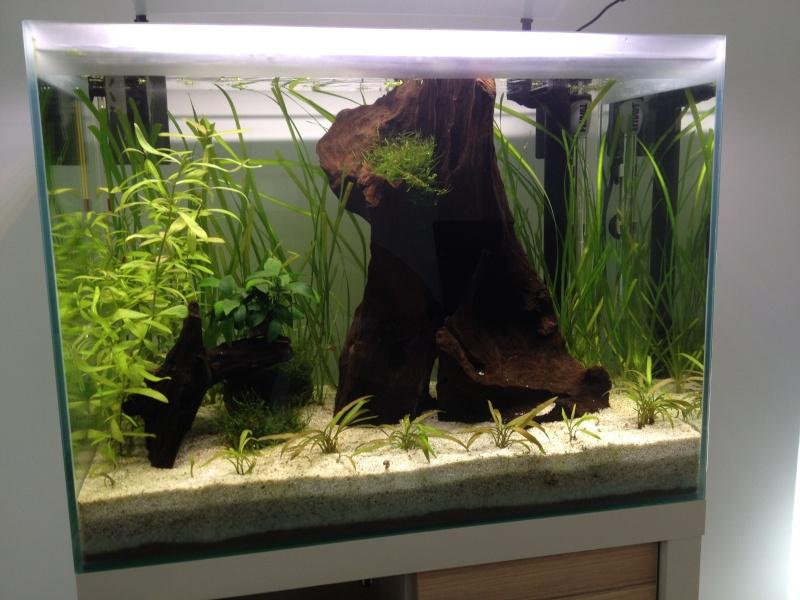 Démarrage aquarium 85L bruts - Page 2 Img_0622