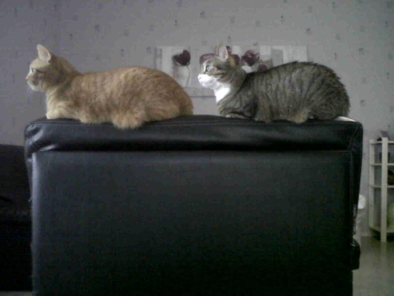 Mes trois p'tits chats. :-) Hyz, Pipou & Dina Img00110