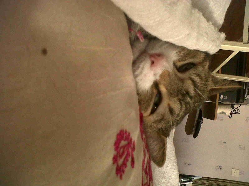 Mes trois p'tits chats. :-) Hyz, Pipou & Dina Img00310