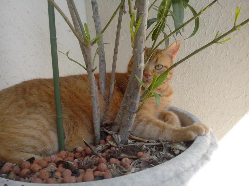 Mes trois p'tits chats. :-) Hyz, Pipou & Dina Img_2012