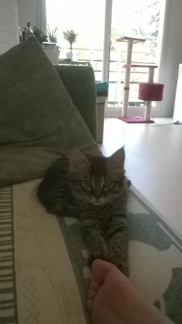 Loki. Wp_20129