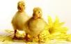 Режими і помилки при інкубації, Modes and mistakes during incubation