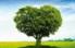 Дерева і чагарники
