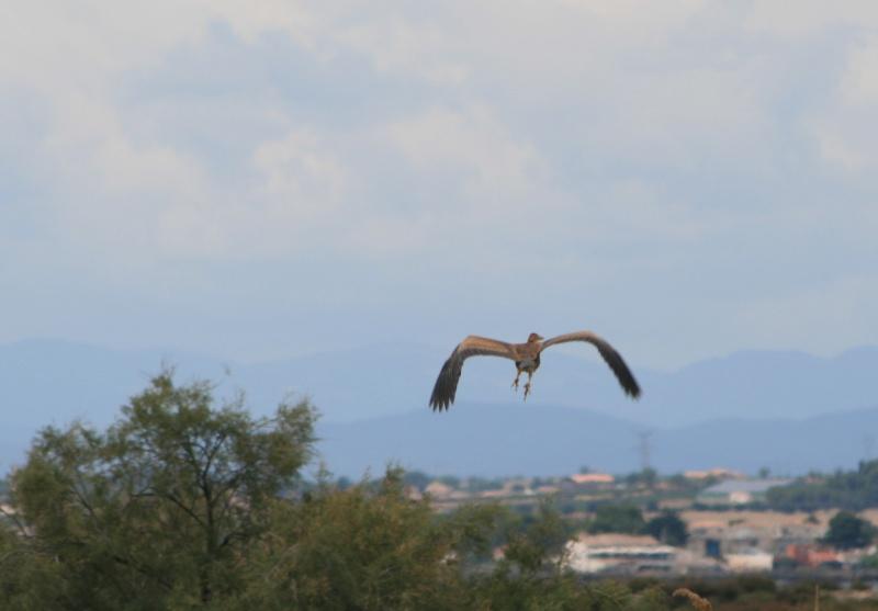 une série d'oiseaux Img_0033