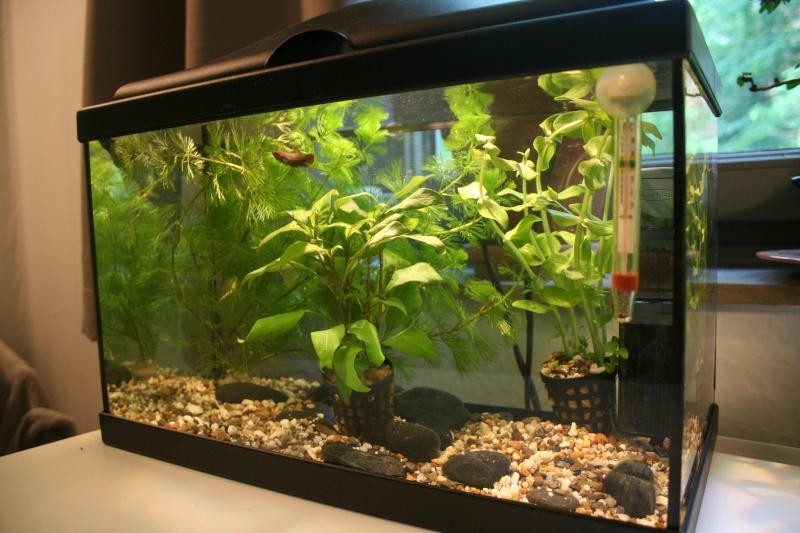 Mon aquarium de 15L Image-10