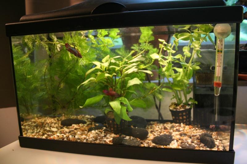 Mon aquarium de 15L Image-11