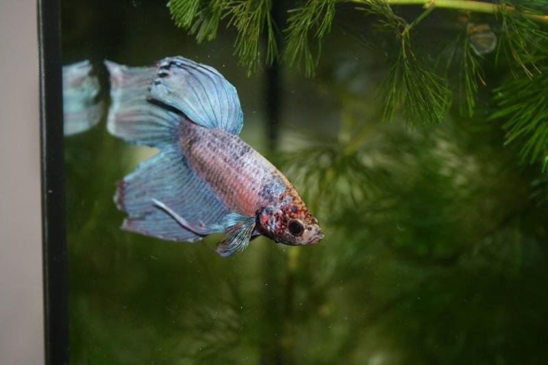 Mon aquarium de 15L Image-13