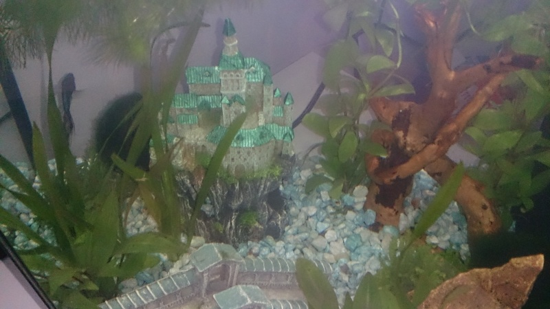 L'aquarium 27l de Marin! Dsc_0412