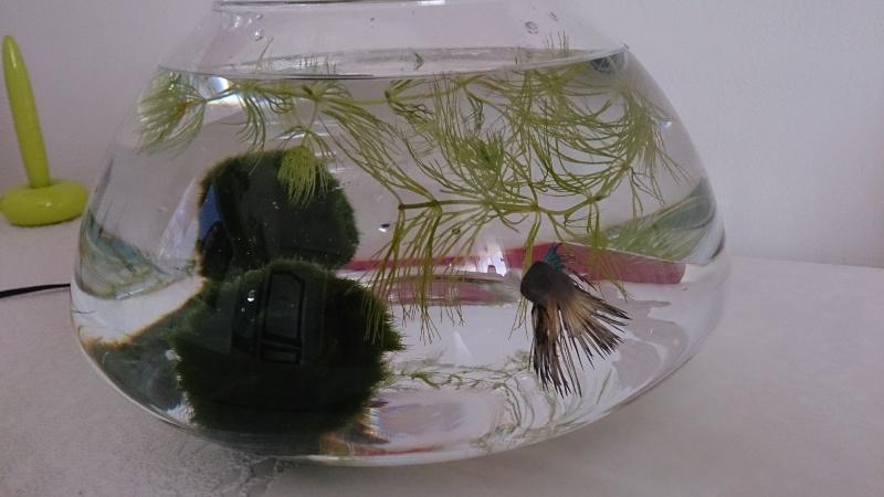 L'aquarium 27l de Marin! Dsc_0413