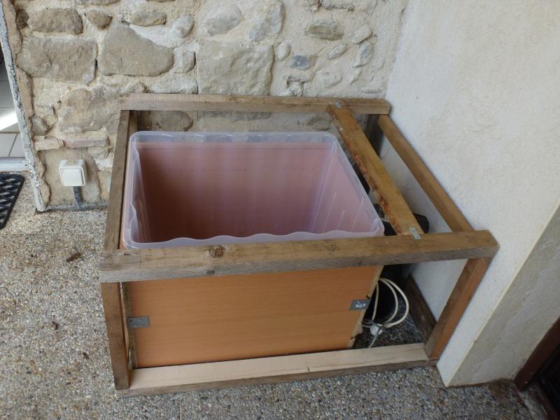 petit bassin pour terrasse P1040113
