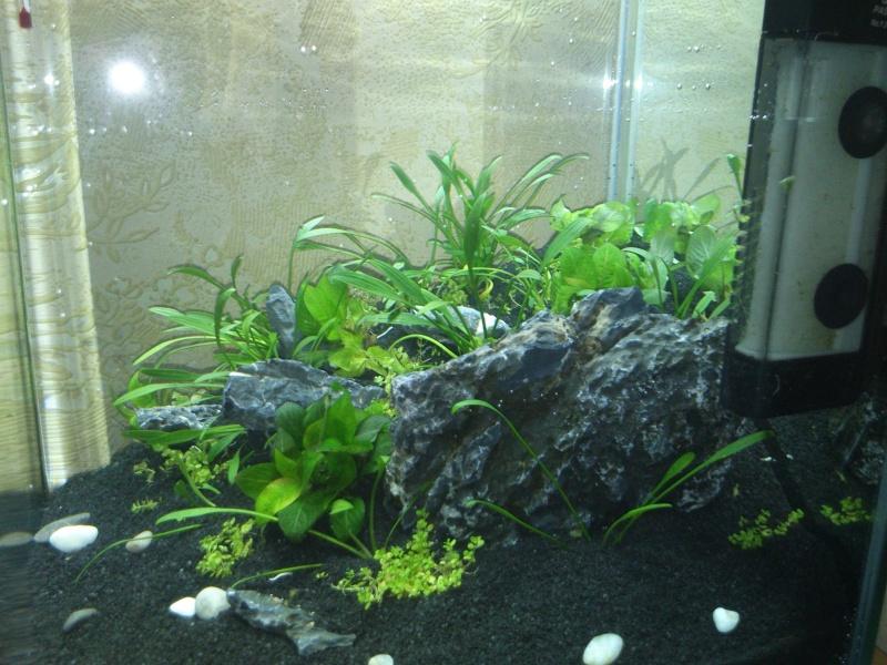 Mon premier bac, nano 20l mix aquascapping/crevettes  Dsc_0011