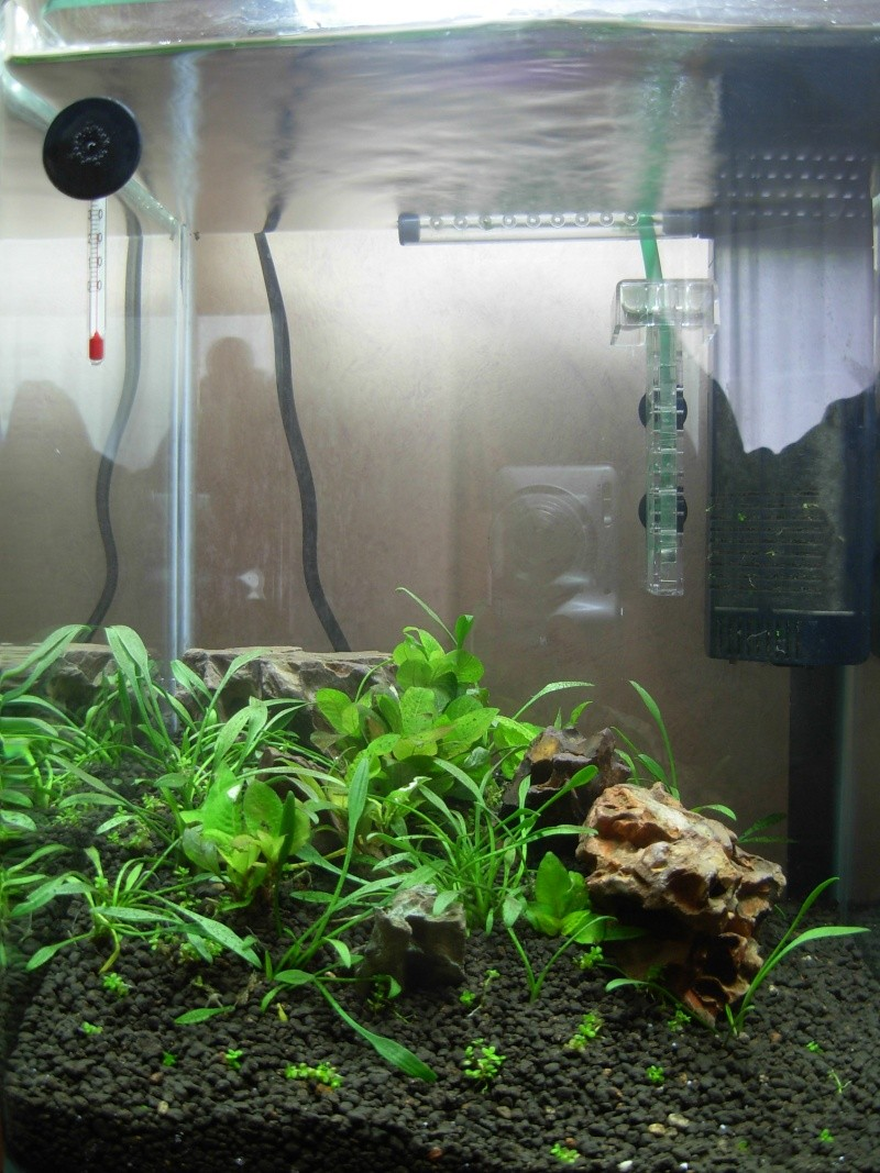 Mon premier bac, nano 20l mix aquascapping/crevettes  Dscn0011