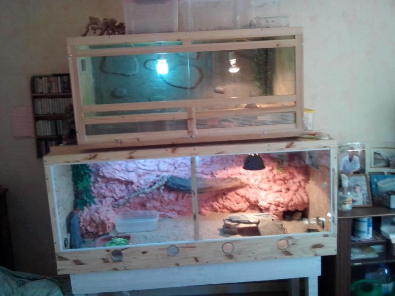 renseignement geckos léopard et taille terrarium 14210