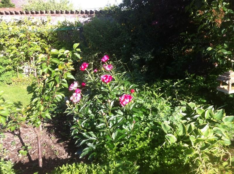 Jardinage en tout genre - Page 3 Jardin20