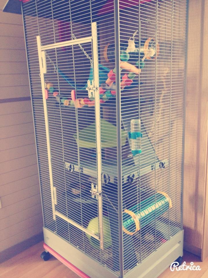 Photos de vos cages - Page 2 10626510