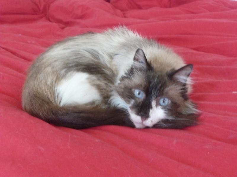 Les mamies et papis chats à l'adoption :) - Page 2 P1030711