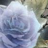 Un souci de pc =) Rose10