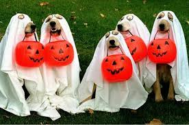 Joyeux Halloween Images10