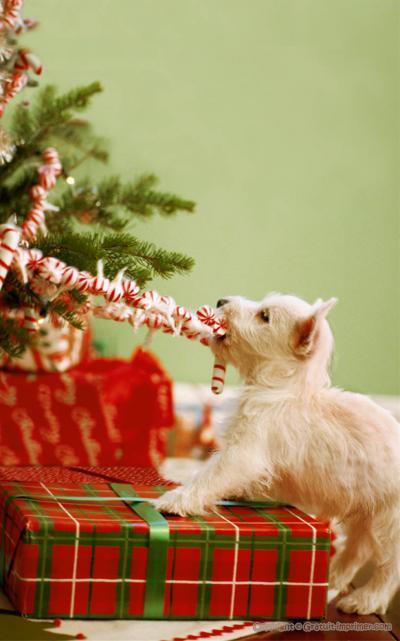 bonne fêtes de fin d'année  Petit_10