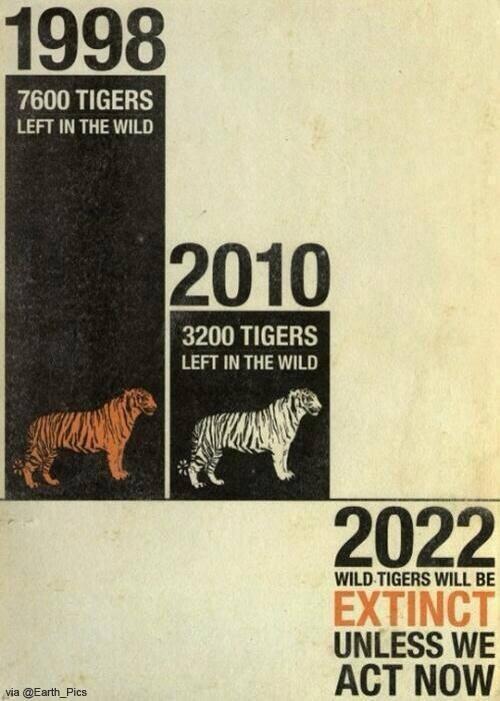 Zigre wild area  - Page 2 10384010