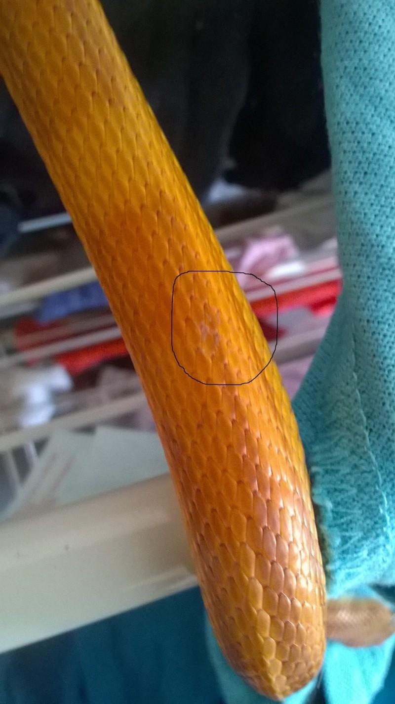 problème de taches élaphe Photo_11