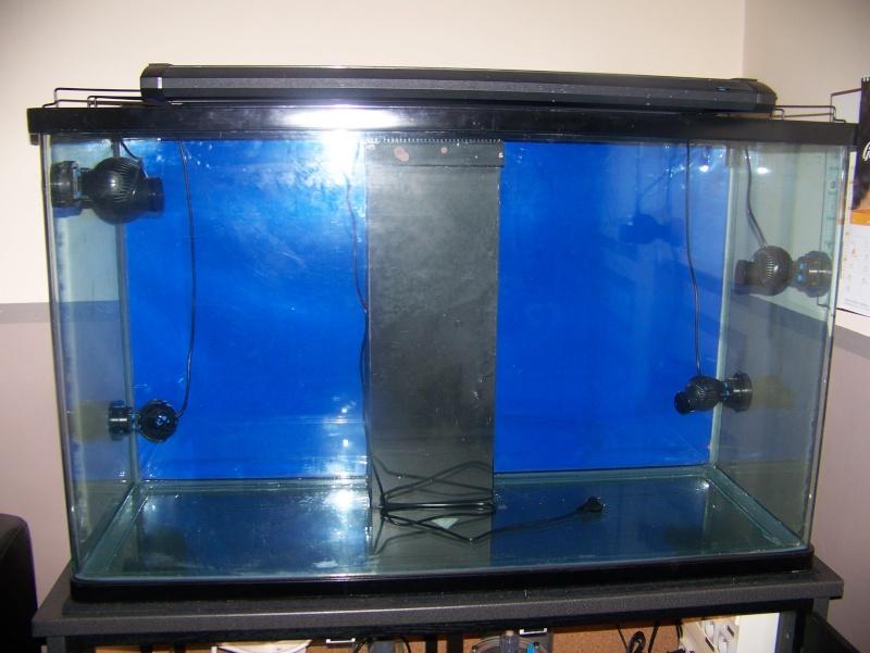 aquarium en cour 100_3816