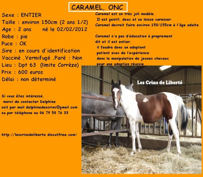 Dpt 63 - CARAMEL ONC pie 2 ans - Delphine - Adopté par Sylv44 (Sept 2014) Les_cr24