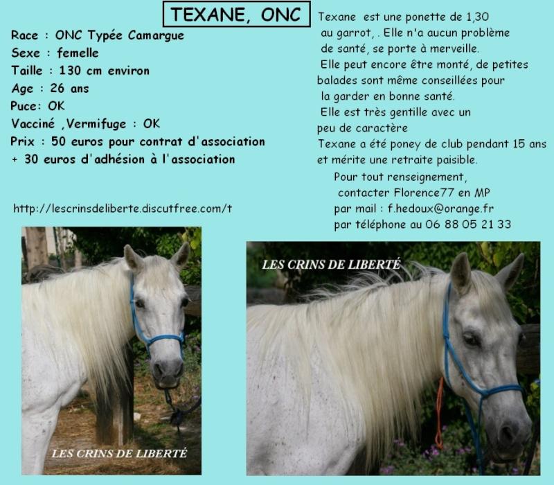 Dépt 84 TEXANE ONC Poney 26 ans réservée par Yoan (2014)Partie * Les_cr62