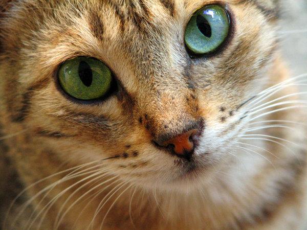 L'image d'avant - Page 2 Cat_by12