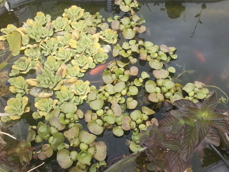 Mon bassin de jardin P04-0712