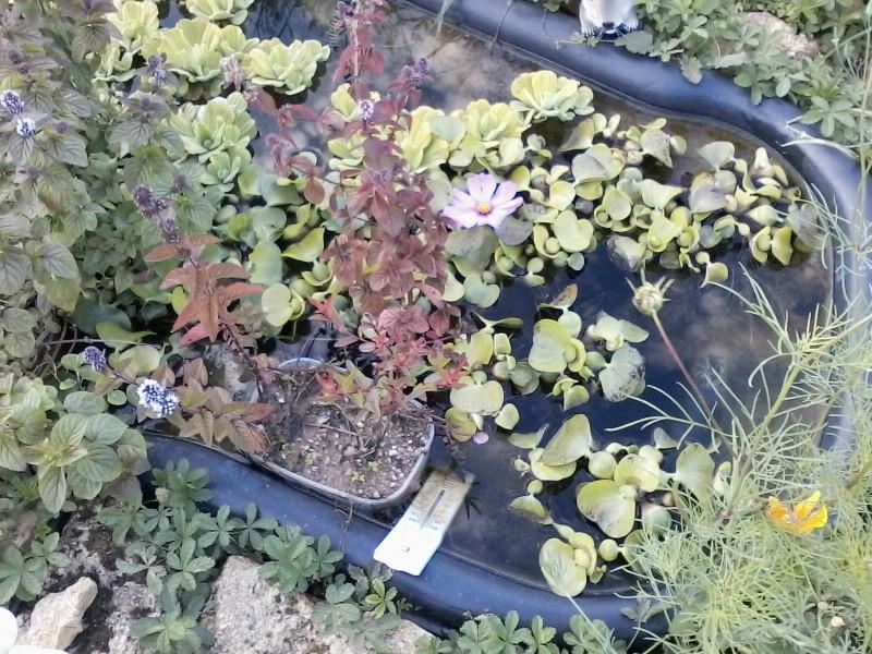Mon bassin de jardin - Page 2 P22-0811