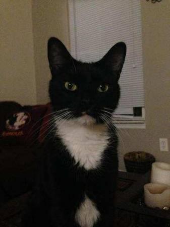 LOST TUXEDO CAT Alb410