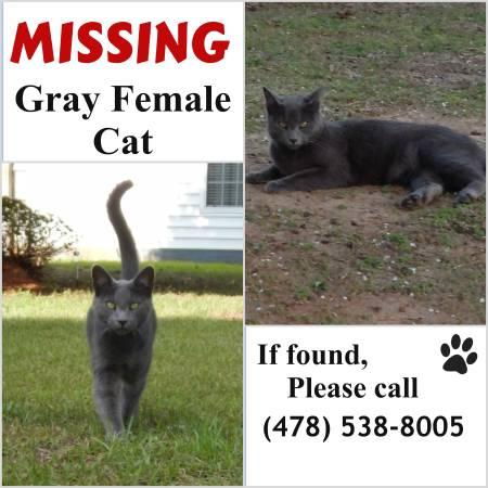 MISSING CAT Alb510