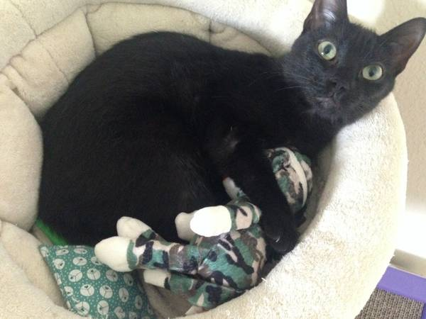 Help find my cat! Buf210