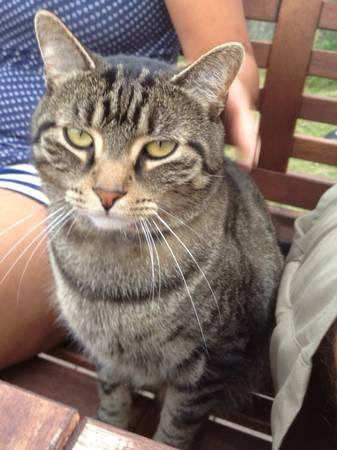 LOST TABBY CAT Ht110