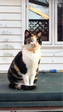 LOST CALICO  Ind710