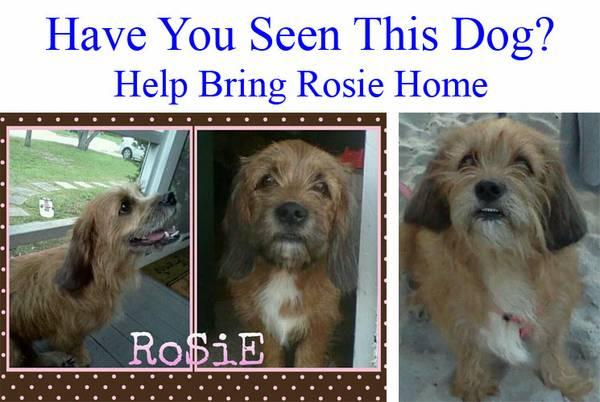 BRING ROSIE HOME Jac710