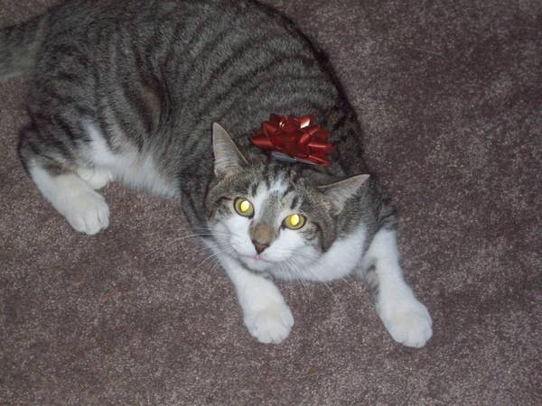 MISSY CHRISTMAS CAT Ky310